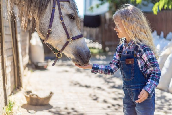 side view of kid feeding horse at ranch